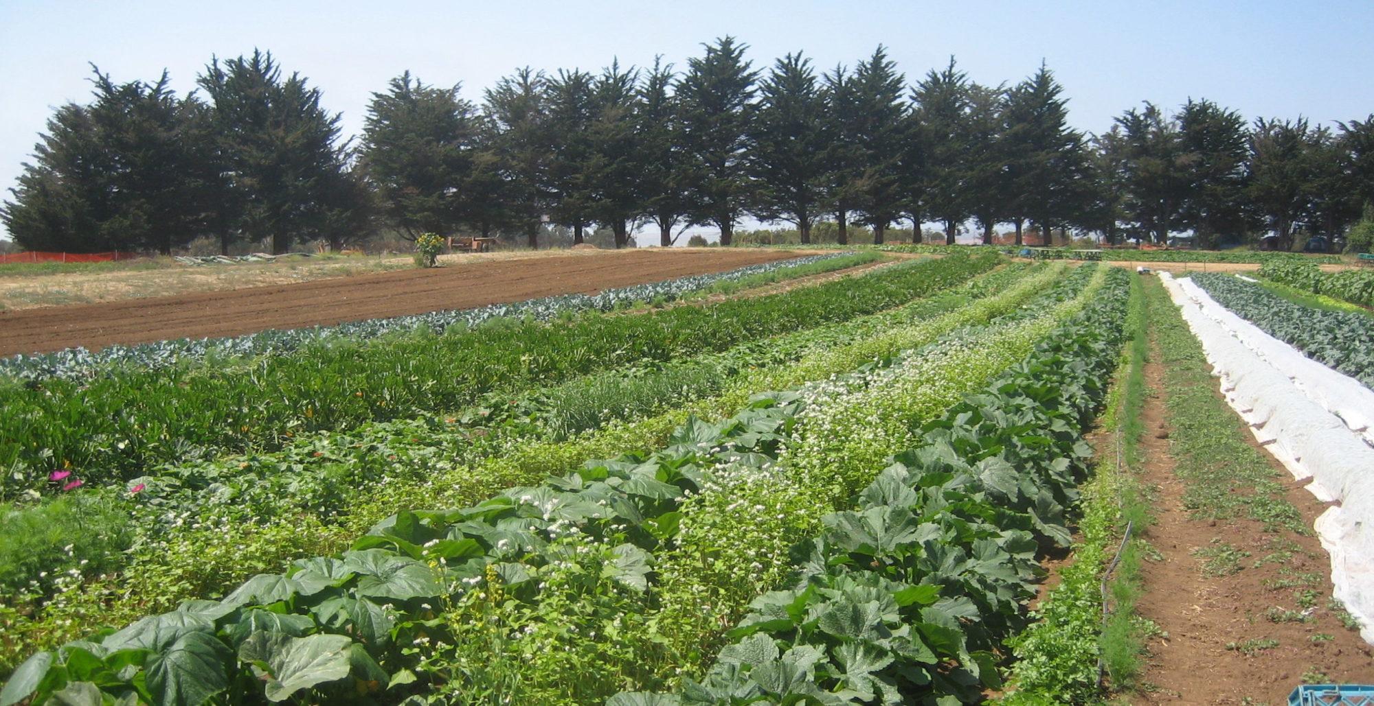 Organización Latinoamericana hacia un nuevo Derecho Agroecológico